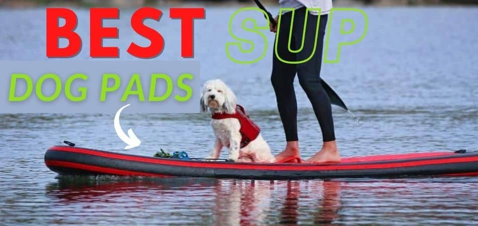 Best Paddle Board Dog Pads