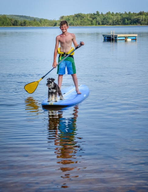 Can You Take Dogs Paddle Boarding